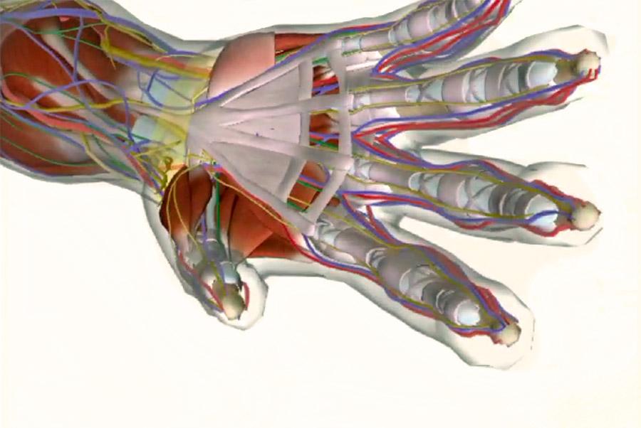 Щелкающий палец. Лечение без операции? Инъекция под УЗИ